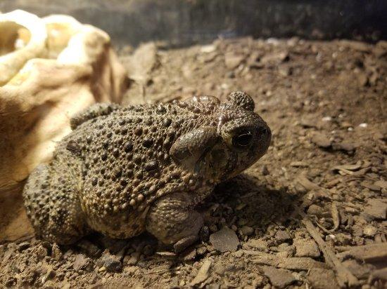 Whiteside Museum of Natural History: 20171220_111131_large.jpg