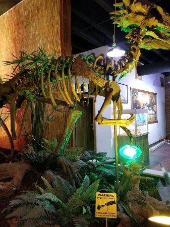 Whiteside Museum of Natural History: 20171220_105947_large.jpg