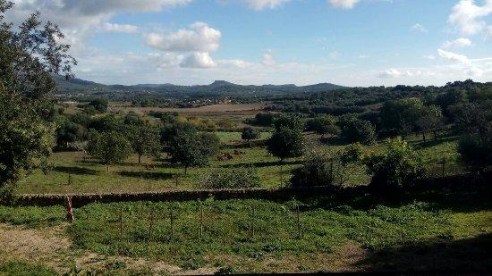 Sant Llorenç des Cardassar, Hiszpania: IMG_20171105_103346_large.jpg