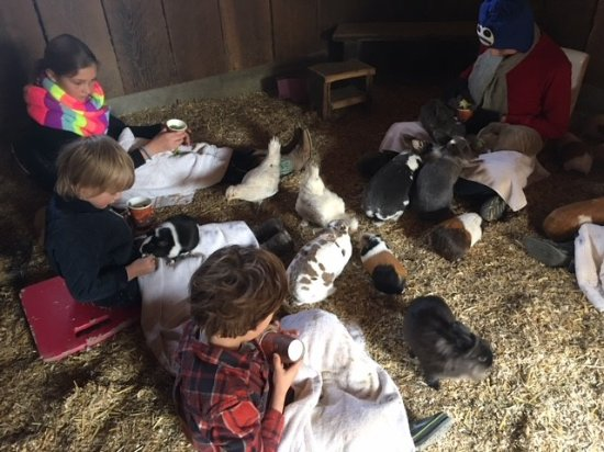 Alisal Guest Ranch & Resort: Feeding the guinea pigs and bunnies