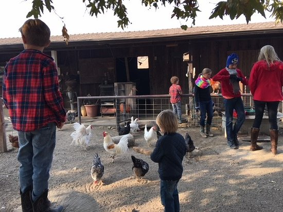 Alisal Guest Ranch & Resort Photo