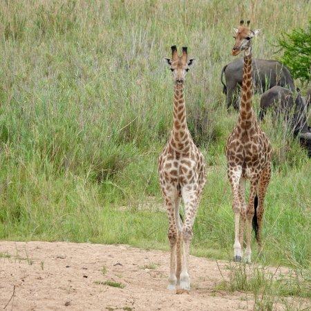Pungwe Safari Camp: photo1.jpg