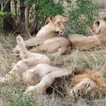Pungwe Safari Camp: photo2.jpg