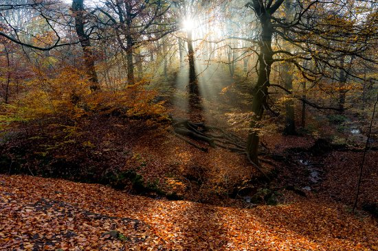 Judy Woods in late autumn - Picture of Judy Woods, Wyke