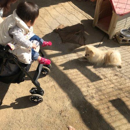 Shibukawa Zoo照片