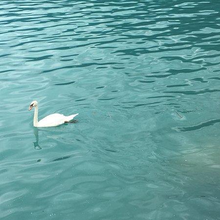 Lake Brienz: photo4.jpg