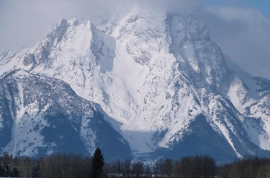 Grand Teton Winter Wildlife Tour