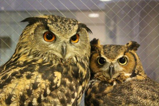 Owl Cafe & Bar Owl Village Kichijoji: スタッフも嫉妬するくらい仲良しのボブわさ!