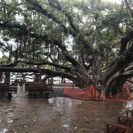 Welcome to Banyan Tree Mayakoba - Banyan Tree Holdings