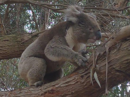Hanson Bay, Australia: 20171220_140055_large.jpg