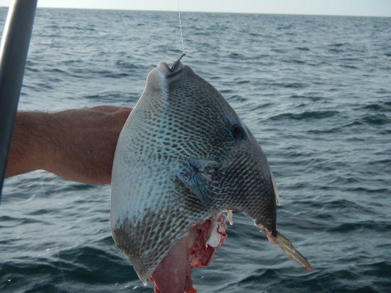 Ft myers cape coral offshore deep sea fishing charters red for Deep sea fishing fort myers florida