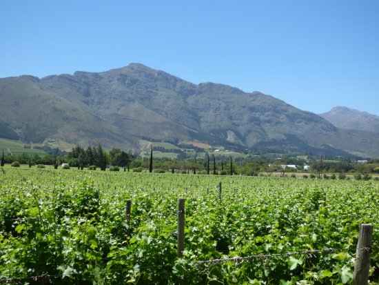 Franschhoek Wine Tram: Acoss the vines