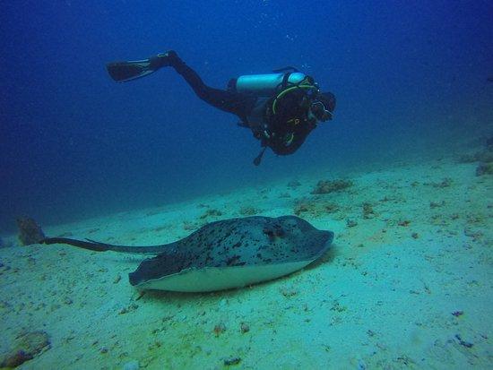Photos de Family Divers Maldives - Photos de Rasdhoo - Tripadvisor