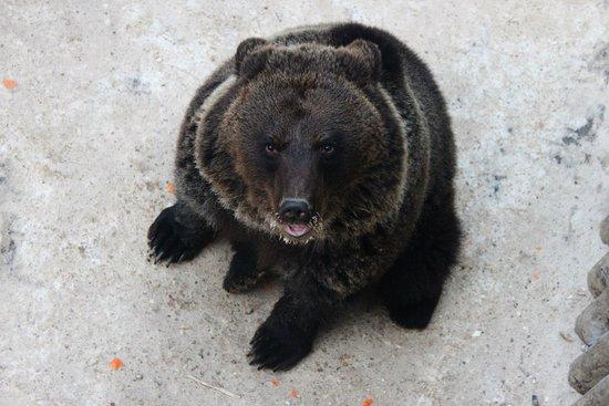 """Stella Travel Company: Посещение зоокомплекса """"Три медведя"""" - обязательная часть многих снегоходных маршрутов"""