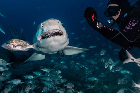 Jupiter, Flórida: Shark Diving with Emerald Charters