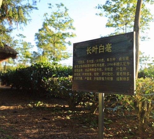 Foto de Ancient Tea Route