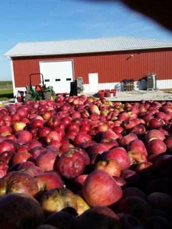 Calmar, IA: They were pressing apples to make cider, it was so cool to see the process!