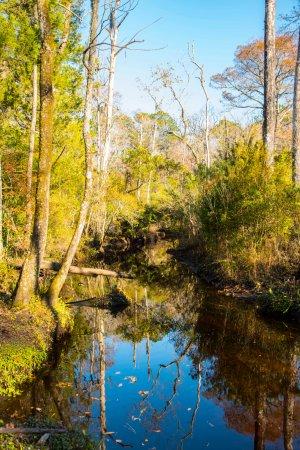 Hubert, Carolina del Norte: View of the creek through Bell Swamp behind Hawkins Creek campground
