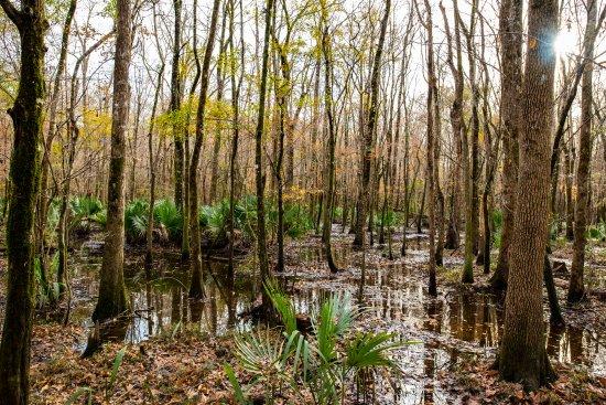 Hubert, Carolina del Norte: Bell Swamp behind Hawkins Creek Campground