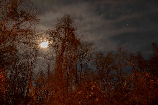 Hubert, Carolina del Norte: Late night shot at Hawkins Creek Campground