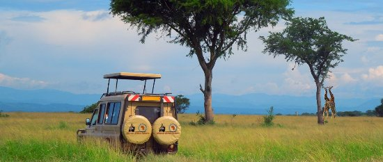 Ruhengeri, Rwanda: One of 4x4 tour vehicles out in the wilderness