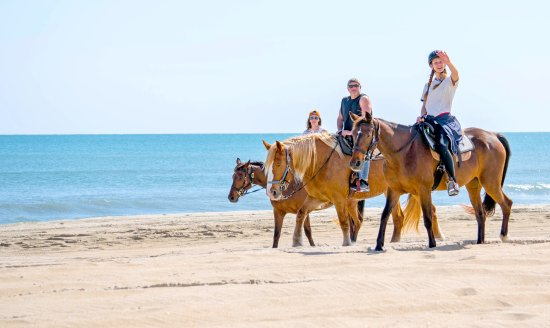 Frisco, Carolina del Norte: Equine Adventures