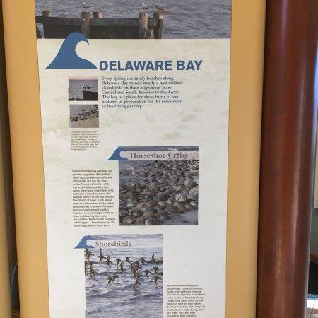 Delaware : photo0.jpg