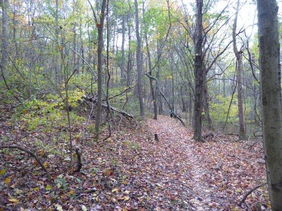 Staunton, VA: Narrow path