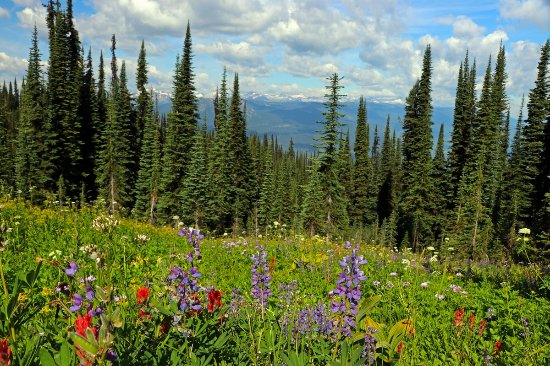Meadows in the Sky Parkway: Gorgeous wildflowers.