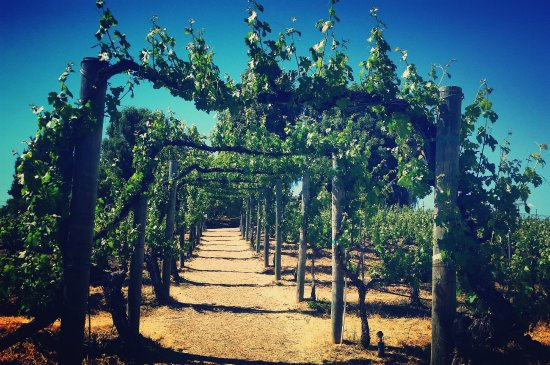 Wilson Creek Winery : The portal into the Temecula Valley's finest winery!