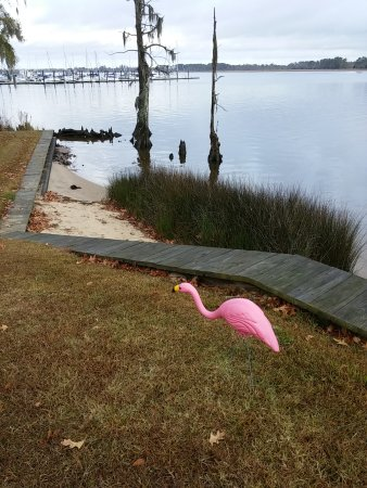 Elusive Plastic Pink Flamingo sighting on Chocowinity Bay