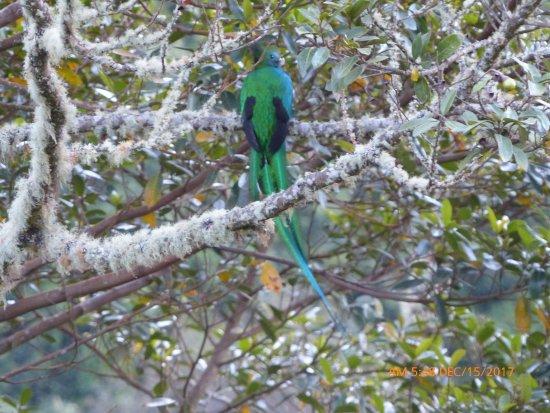 Savegre Hotel, Natural Reserve & Spa: Resplendent Quetzal