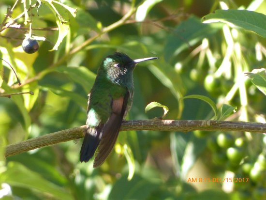 Savegre Hotel, Natural Reserve & Spa: bird on the grounds