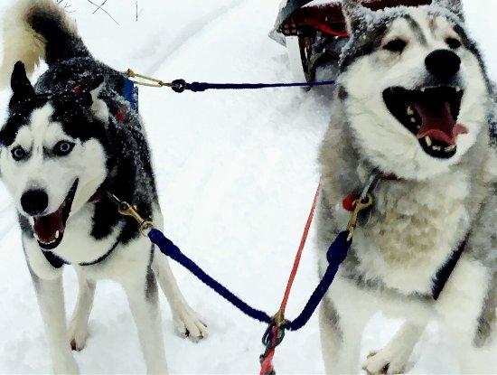 Winterdance Dogsled Tours: fun pups