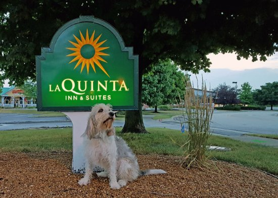 La Quinta Inn & Suites Chicago Gurnee: Front sign for the hotel with my dog