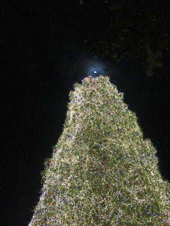 Brookgreen Gardens: moon as star...