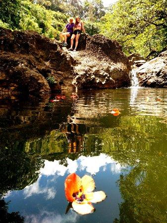 Paia, HI: The Maui Road to Hana Tour Company
