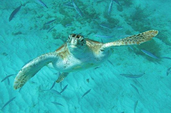 Tranquility Cruises: Turtle