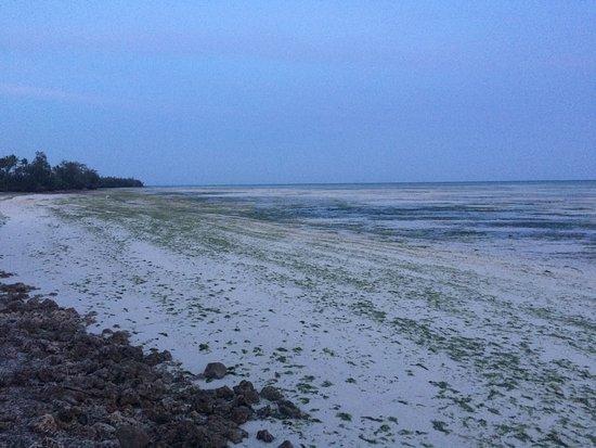 Palumboreef Reef Beach Resort: Uroa Beach