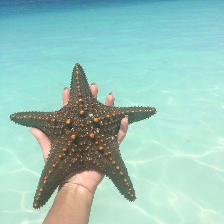 Palumboreef Reef Beach Resort: Kendwa