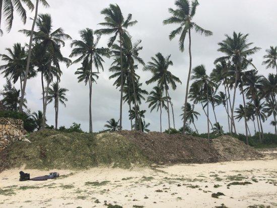 Palumboreef Reef Beach Resort: Montagna di alghe