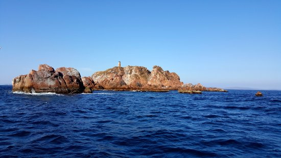 Primorsky Krai, روسيا: У островов обитают Ларги