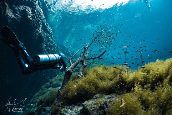 Pro Dive International: Cenote Carwash