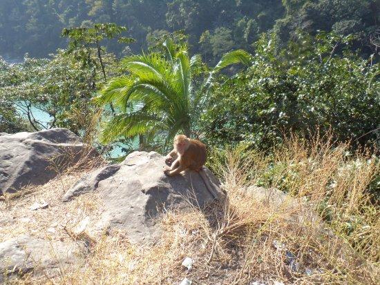 Resort Mayur: Monkey enjoying sunshine