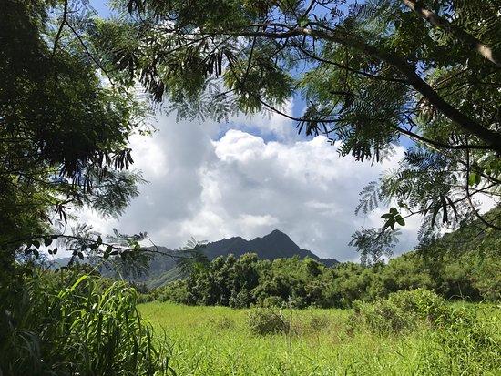 Kaneohe, HI: Exploring the beauty of the garden leaves on breathless.