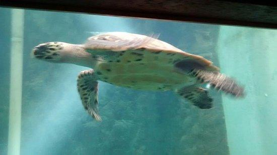 Buceo Scuba Huatulco: podemos observar tortugas marinas sin nesecidad de entrar al mar