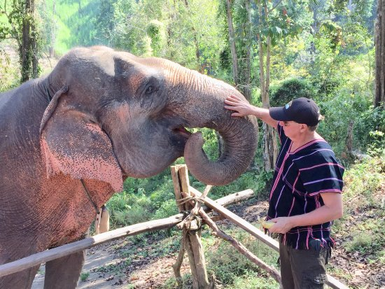 Chiang Mai Elephant Sanctuary: Meeting the elephants on arrival