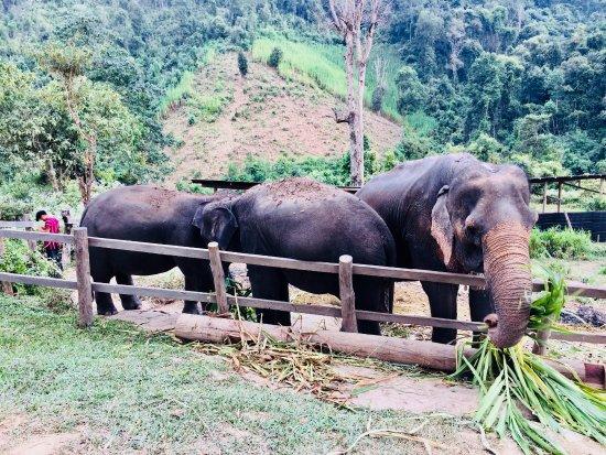 Chiang Mai Elephant Sanctuary: some of the elephants