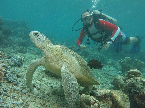 Seaventures Dive Rig: Yet more turtles, close up.