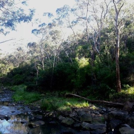 Mullum Mullum Creek Trail